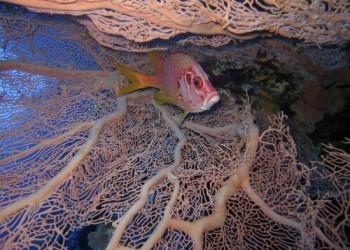 Panorama Riff Tauchsafaris Husarenfisch