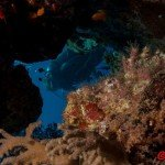 Cave Riff Trip Report MY Blue Seas 09.-16.07.2015