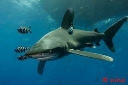 Top Dive Spots