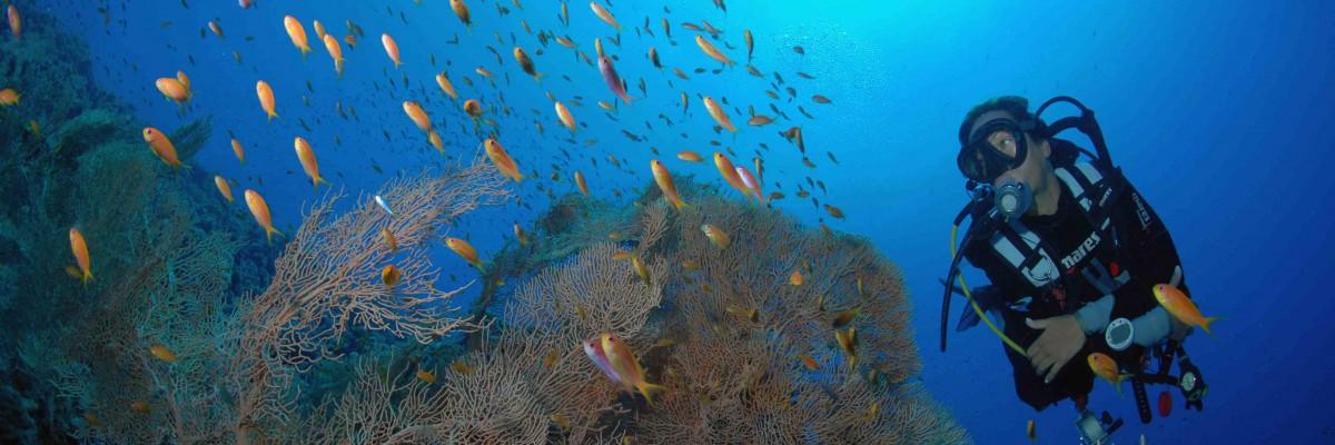 Brother Islands Tauchreise Ägypten am Roten Meer