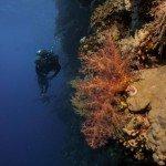 Trip report MY Blue Seas 06.-13.11.2015