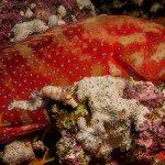 Jackson Riff Trip Report MY Blue Seas 23.07. 30.07.2015