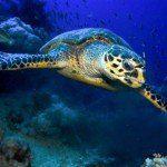 Jackson Riff Trip Report MY Blue Pearl 13.08.-20.08.2015