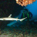 Cave Riff Trip Report MY Blue Seas 31.07.-07.08.2015