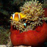 Jackson Riff Trip Report MY Blue Seas 31.07.-07.08.2015