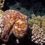 Gordon Riff Oktopus